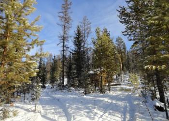 11 января – день заповедников и национальных парков