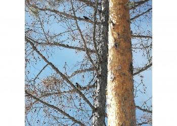 Учеты птиц на весеннем пролете